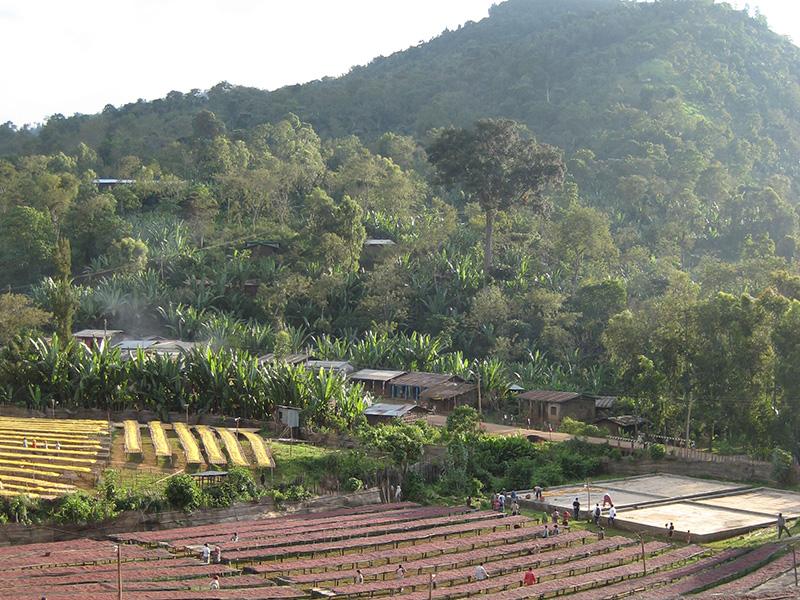 アフリカ コーヒー生産地