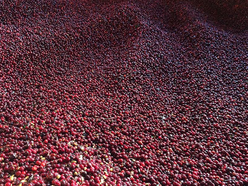 中米 コーヒー生産地