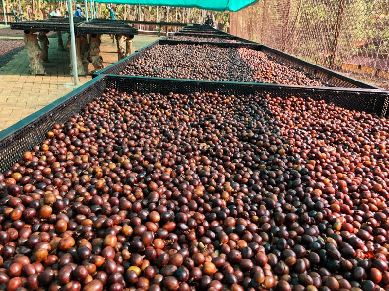 インド コーヒー生産地